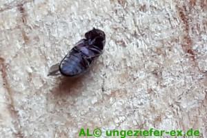 Kleiner Käfer auf dem Rücken Foto©AL