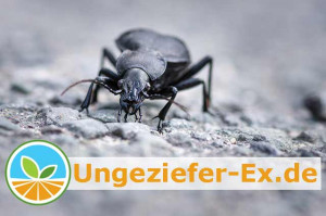 Ungeziefer Wissen Schädlingskunde und Anti-Vermin Ratgeber: Erfolgreiche Ungezieferbekämpfung