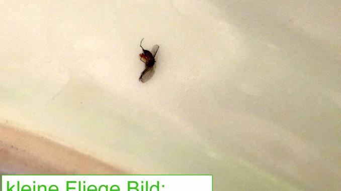 kleine Fliegen in der Wohnung Ansicht