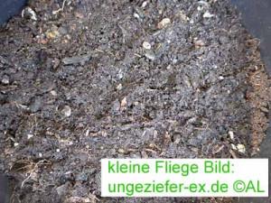 kleine Fliegen in Erde - Blumenerde mit Fliegenlarven Bild